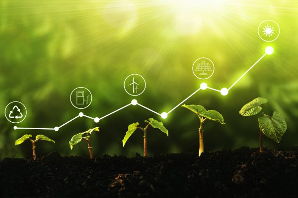 Young,Plants,Growing,At,Sunlight,With,Increase,Graph,And,Icons